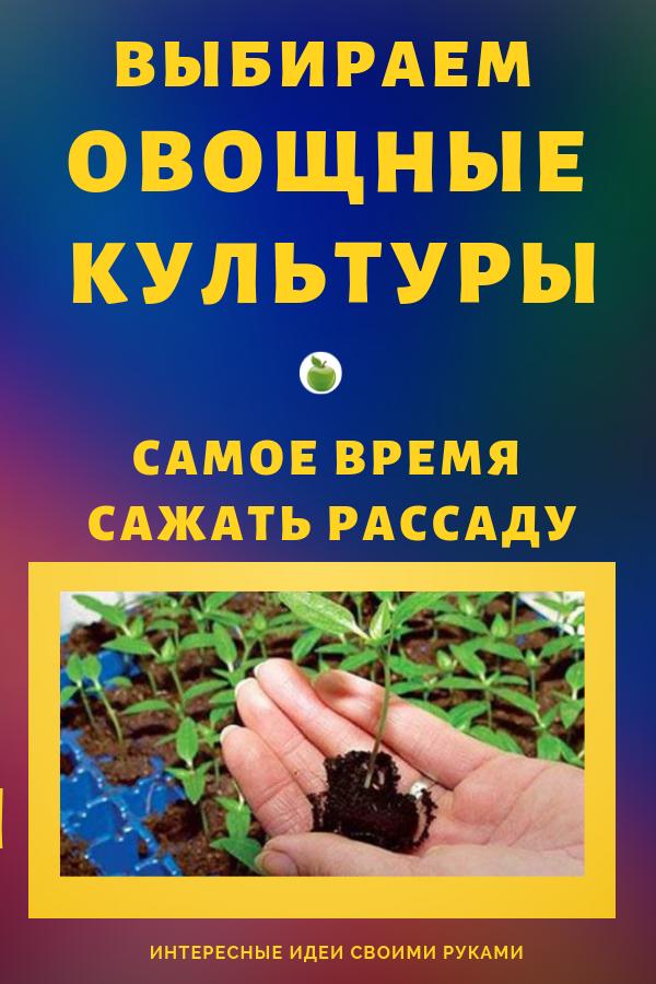 Хлопоты перед началом нового урожайного сезона будут не такими трудными, если позаботиться о главном — рассаде — заранее. Для этого следует знать, какие овощные культуры можно сажать на рассаду уже в феврале. Огород, дача, сад своими руками.