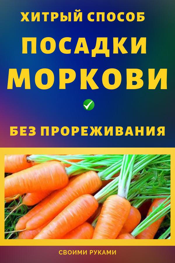 Хитрый способ посадки моркови без прореживания обеспечивающий хороший урожай... Дача и огород своими руками: как получить большой урожай моркови?
