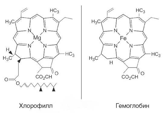 Анемия: Какие продукты нарушают всасывание железа...